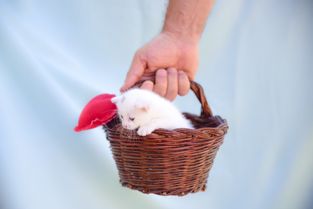 little white kitten inside a wicker basket held up by a hand