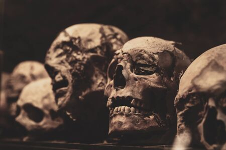 Skulls. Group of mummified skulls inside an ancient crypt Standard-Bild