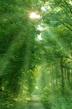 enchantment: Mystic Forest in Springtime with Sun rays Stock Photo