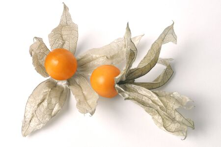 papery: Golden Cape Gooseberry (Physalis peruviana) with open papery husk