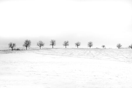 Winter solitude - row of trees in winterly landscape with snow