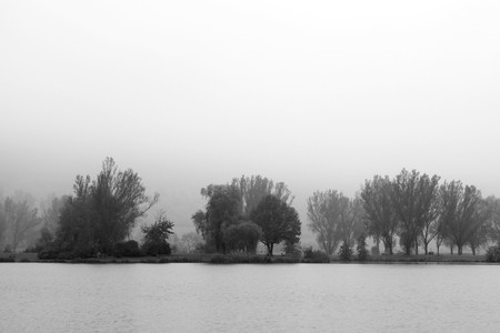 tristesse: autumn trees in b&w - concept for sorrow and misery