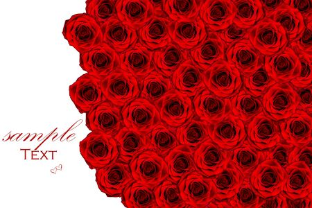 occasions: Over view of large red roses for special occasions