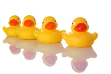 four objects: Four little Rubber Ducks sitting in a row with reflection on white  Stock Photo