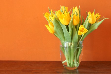 Fresh yellow tulips blossoming in a glass vase  Reklamní fotografie
