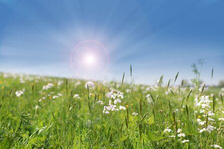 Wild flowers growing in a field with warm summer sun