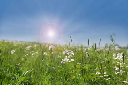 Wild flowers growing in a field with warm summer sun  Stock Photo - 4897748