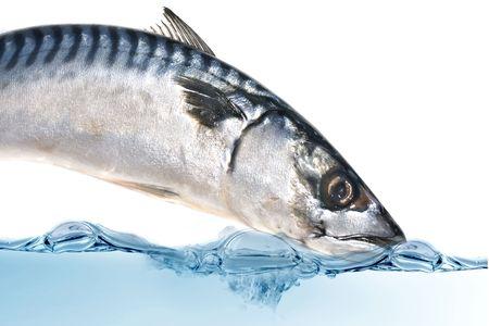 Fresh Mackerel fish diving into the water.
