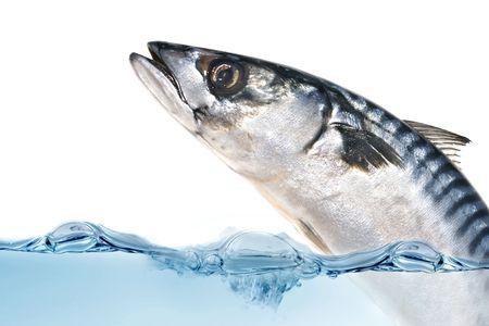 Fresh poisson Maquereau sautant hors de l'eau.