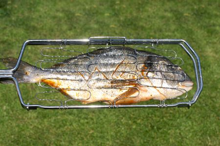 Fresh gilthead ready for smoking or grilling. photo