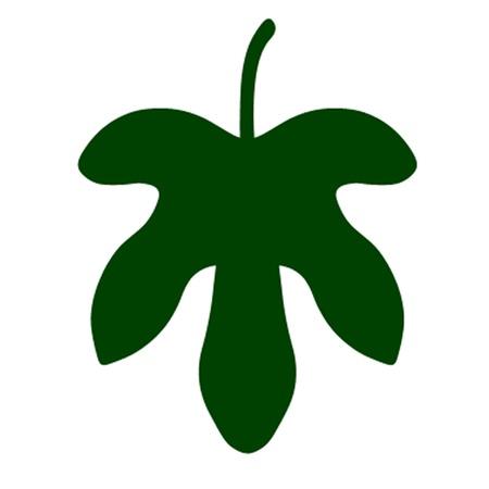 Fig Leaf Banque d'images - 11813536