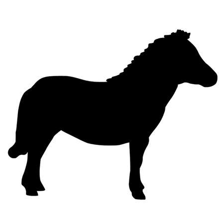 Shetland Miniature Pony Stock Vector - 12833805