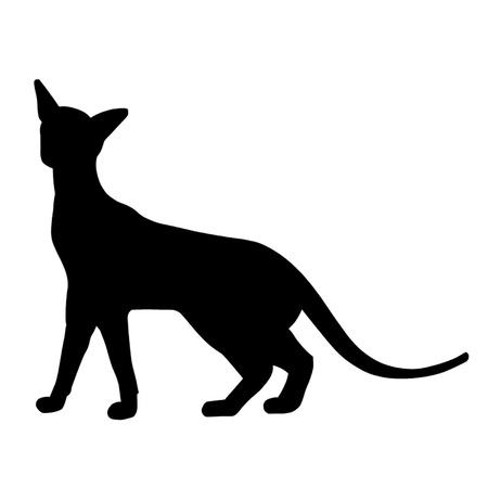 siamese cat: Siamese Cat