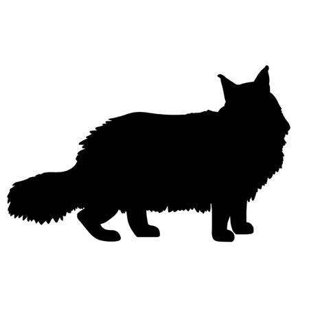 silhouette gatto: Gatto Maine Coon