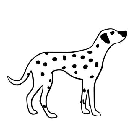 dalmatian: Dalmatian Dog