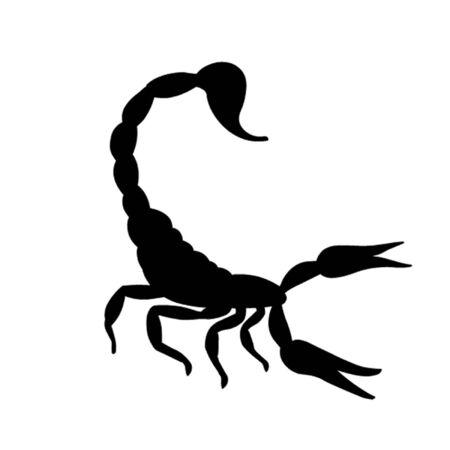 sting: Scorpion Illustration
