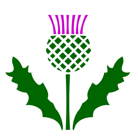 scot: Scottish Thistle