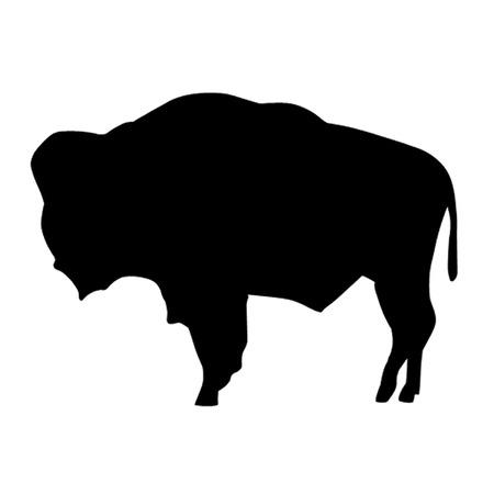 american bison: American Bison