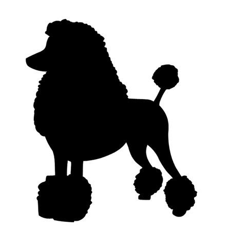 show dog: Poodle Dog Illustration
