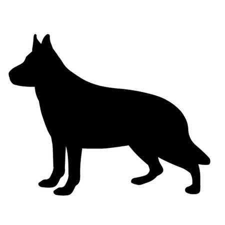 alsatian: German Shepherd Dog