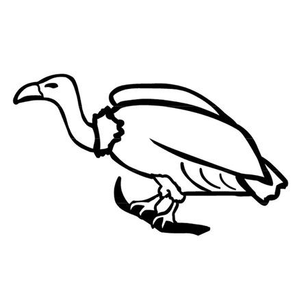 bird of prey: Vulture
