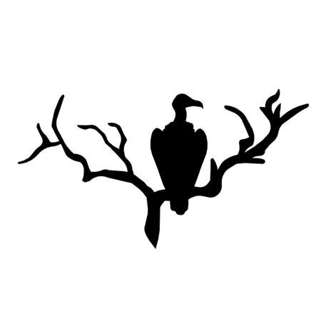animalia: Vulture