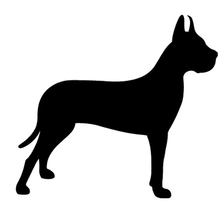 great dane: Great Dane Dog
