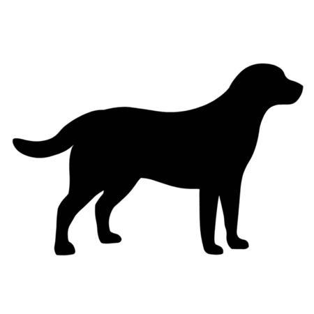 black labrador: Labrador Retriever Dog