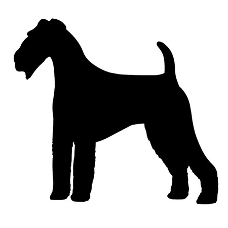 airedale terrier: Airedale Terrier