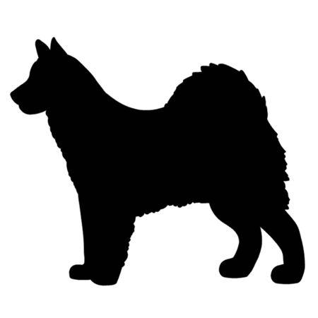 alaskabo: Alaskan Malamute hund