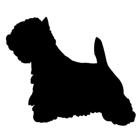 highland: West Highland Terrier Dog