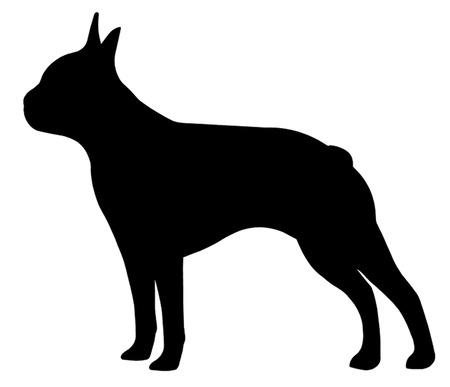 ボストン テリア犬
