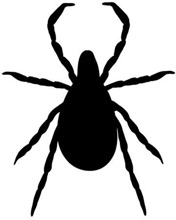 Tick Illustration