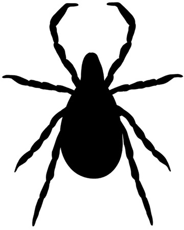 arachnids: Tick Illustration