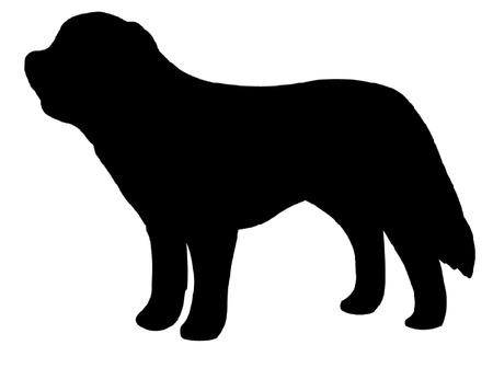 st bernard: St. Bernard Dog