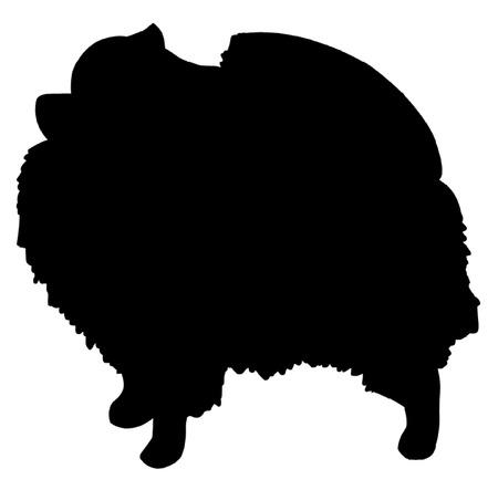 Perro de Pomerania