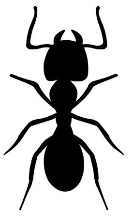 hormiga: Las hormigas Vectores