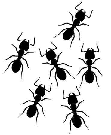 Ants Illustration