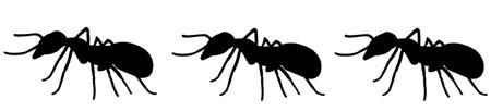 ants: Ants Illustration