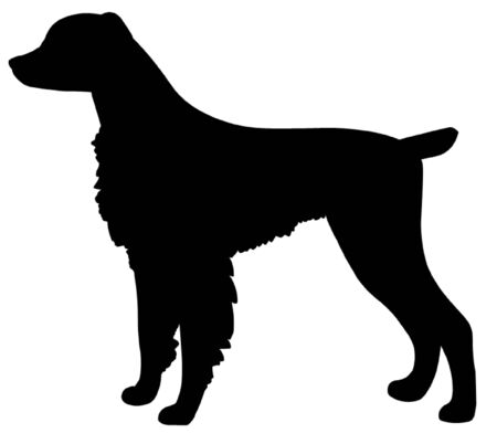 spaniel: Brittany Spaniel Dog Illustration