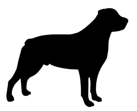 herding dog: Rottweiler Dog Illustration