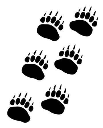 spectacled: Bear Paw Track