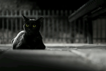 Black cat by night