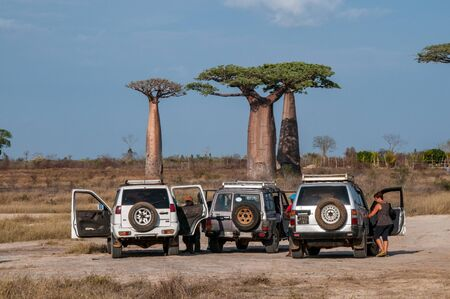 Off-road vehicles stop to admire the great baobabs of Morondava Editorial