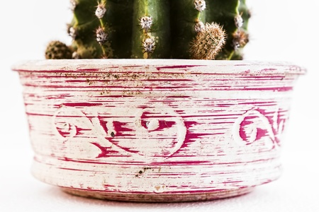 close up of a decorated jar with a cactus inside Stock Photo - 18957336