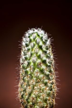 Closeup of cactus on red gradient background Stock Photo - 19055937