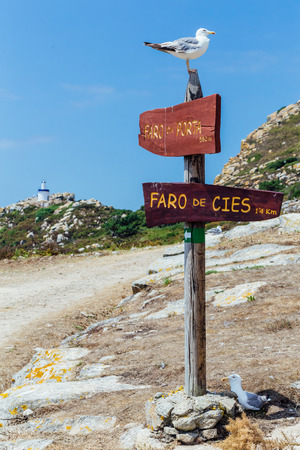 Wooden road signs to lighthouses with seagulls resting on