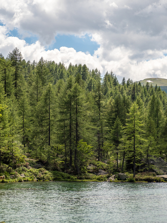 mountain lake next to a wood