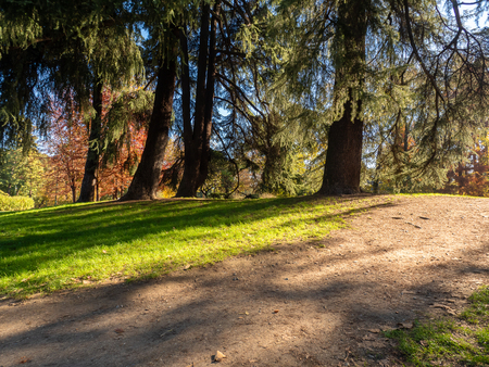 a walking path in the middle of a park that pass the shade of the pines Banco de Imagens