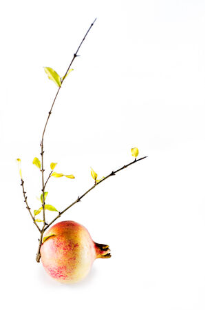 ripe: ripe pomegranate and branch with yellow leaves isolated Stock Photo